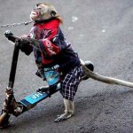 Becoming a responsible tourist: No monkey circus please!