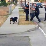 CA Police Arrest innocent Man, then shoot his Dog in Front of Him