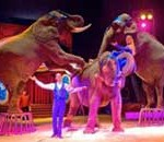 AT LAST! Ban on ALL wild animals in circuses is passed