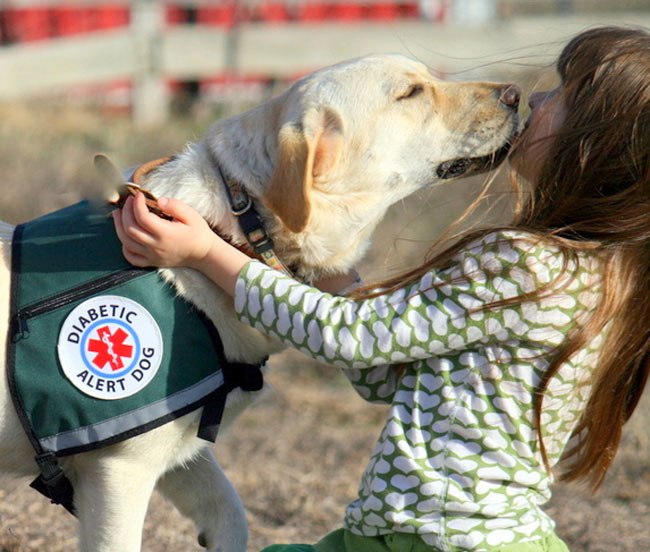 Can Dogs Detect Low Blood Sugar