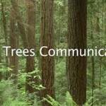 Trees Communicate With One Another, Connected by Fungi (Video)