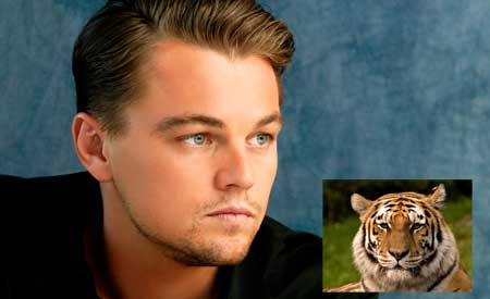 DiCaprio shows the day again : donates $3m to save tigers