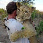 Lion forms close, rare bond with tow men who saved her