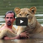 A lion who was raised by humans - MUST WATCH!!!