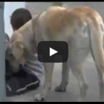 Amazing loving and caring shown by a dog