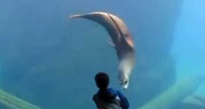 Boy With Asperger's Finds Friend In Zoo's Sea Lion (VIDEO)