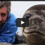A Man Sits Very Closely To A Baby Seal
