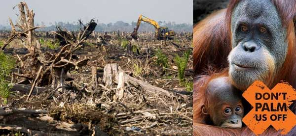 Do not buy palm oil products, Help preserve worlds best bio-diversity centre's and its wildlife