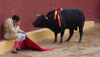 Who is the bull ?