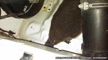 Australia platypus survives 15km ride stuck in car engine