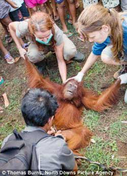 Orangutan tied up and taunted by cruel mob which made her climb up a pole is rescued by a British charity