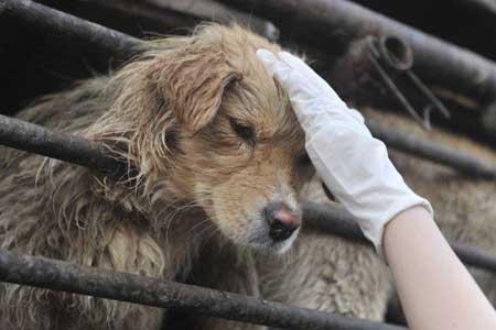 China bans ancient dog-eating festival after online uproar