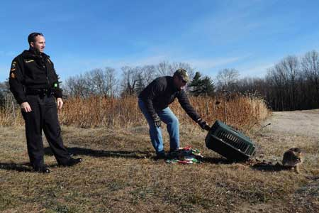 Henniker police sergeant helps nurse injured bobcat back to health