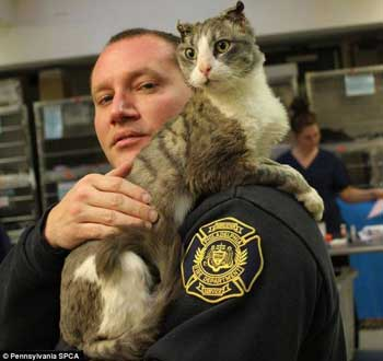 Dying mama cat was saved by the Firefighter while her kitten looks on