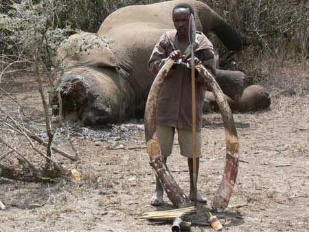 Ruthless ivory poachers driving these majestic beasts to extinction in the bloody and ruthless 'War Against Nature.'