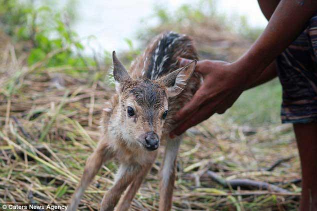 save baby deer