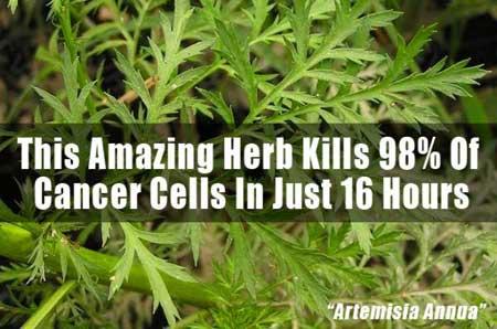 Herb Kills