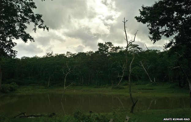 Asia's  Largest secure forest network